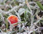 the color in the frost....., di rossimarco_76