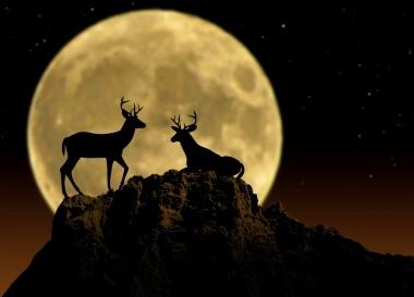 Al chiaro di luna foto - Il giardino al chiaro di luna ...