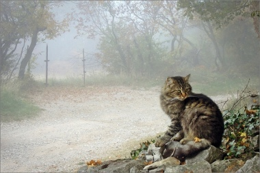 Cat in autumn, di Yanez
